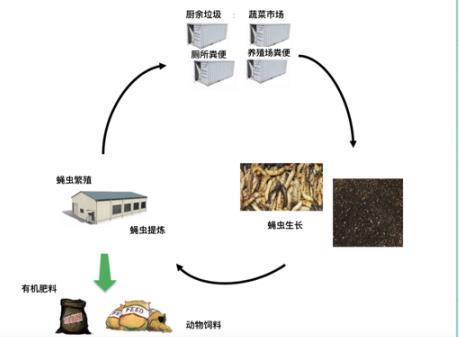 有机垃圾生物处理技术-餐厨垃圾